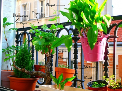 Balcon terrasse jardini re aromatique - Plante aromatique balcon ...