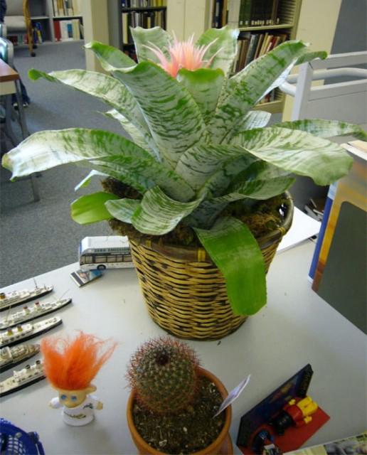 8-plantes-au-bureau