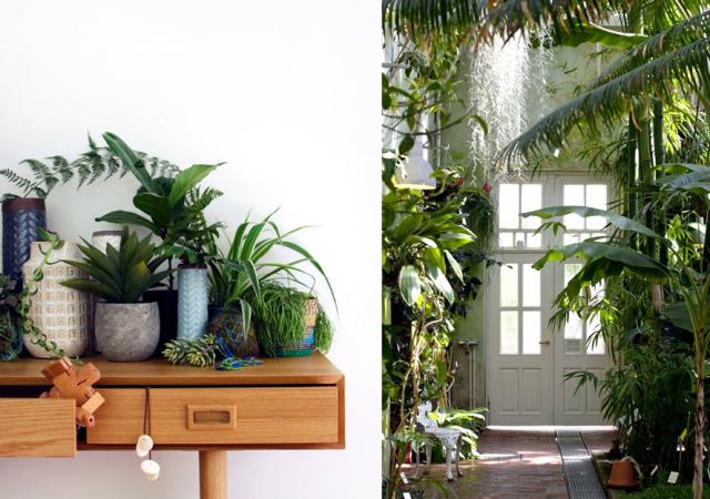 deco-tropicale-urban-jungle-4