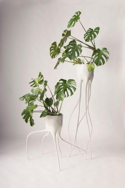 plante interieur graphique