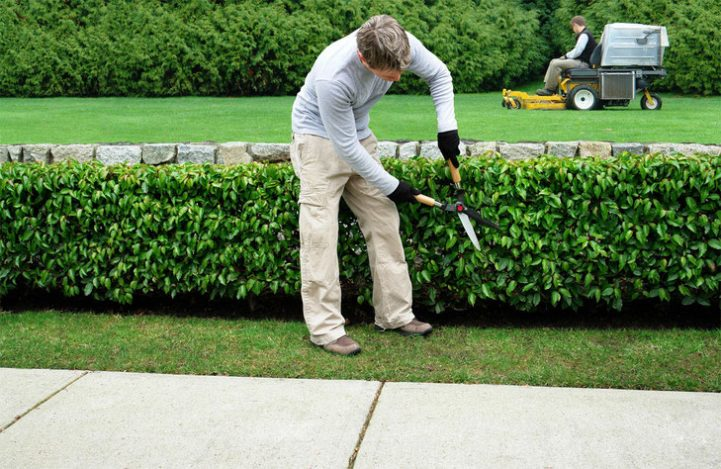 Les avantages d'engager un jardinier paysagiste pour un jardin unique et personnalisé