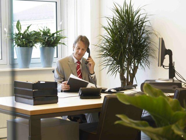 Les plantes intérieures pour le bureau