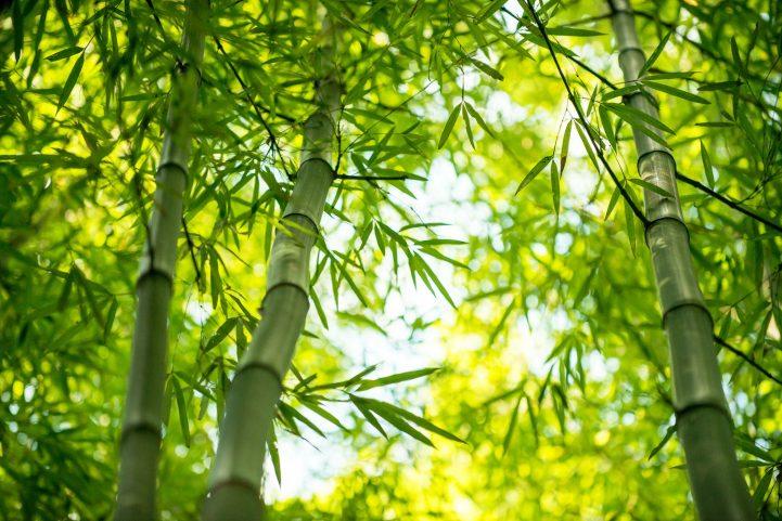 les caractéristiques du bambou